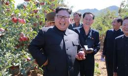 Lãnh đạo Triều Tiên – Hàn Quốc cùng trồng cây hòa bình