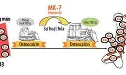 Vai trò của MK7 đối với sự phát triển chiều cao của trẻ