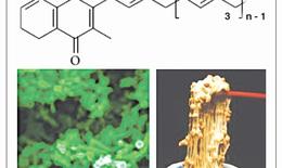VitaMK7®, Vitamin K2 tối ưu (menaquinonone-7) từ quá trình lên men tự nhiên của Bacillus subtilis natto