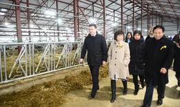 Khánh thành trại bò sữa của TH true MILK trên đất Nga