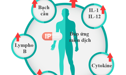 IMMUNEPATH - IP®- 3 lợi ích vượt trội của chất trợ sinh miễn dịch