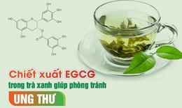 Phòng chống ung thư bằng chiết xuất EGCG trong trà xanh