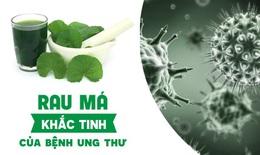 """Rau má - """"khắc tinh"""" của bệnh tế bào ung thư"""
