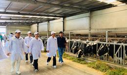 """""""Resort"""" bò sữa Tây Ninh là hạt nhân để xây dựng vùng chăn nuôi bò sữa an toàn dịch bệnh"""