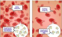 Chức năng tạo máu và sự phát triển của cơ thể trẻ