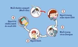 Không nên xem nhẹ dịch bệnh sốt xuất huyết và các bệnh do muỗi gây ra