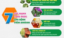 [Infographic]: Công thức 7 thảo dược thiên nhiên hiệu nghiệm cải thiện và ổn định Amidan cho trẻ