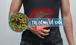 Rau đắng đất - Cây thuốc sạch dân dã chứa nhiều hoạt chất tốt cho lá gan