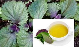 Giải khát với trà tía tô: Lợi cho sức khỏe, thăng hạng nhan sắc