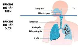 Giải pháp chống viêm đường hô hấp, ngừa tái phát ho cho trẻ