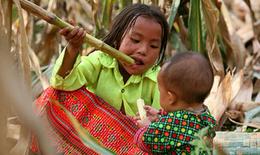 Trên 30% trẻ em dân tộc thiểu số dưới 5 tuổi bị suy dinh dưỡng thấp còi