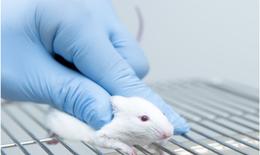 Cấy ghép tế bào gốc- niềm hy vọng cho người mù