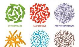 Không dùng men vi sinh cho hầu hết các bệnh đường tiêu hóa