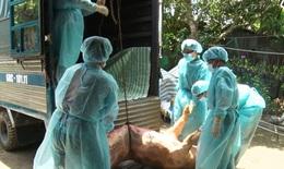 Mới: Ban hành chính sách, mức hỗ trợ kinh phí trong bệnh dịch tả lợn Châu Phi