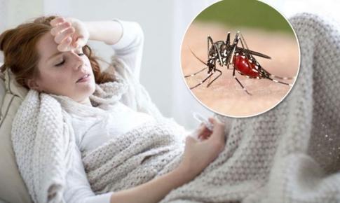 Các bài thuốc phòng và trị bệnh sốt rét