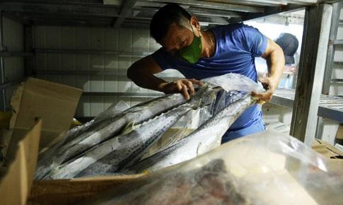 Hàng ngàn tấn hải sản tồn kho, người dân 'ngồi trên đống lửa'