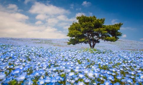 Những cánh đồng hoa xuân đẹp nổi tiếng thế giới
