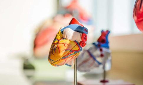Phát hiện biến thể di truyền hiếm gặp - nguyên nhân gây đột tử do tim