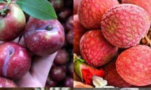 Ăn hoa quả nhiều lại tăng cân vì sao?