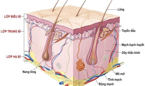 Mọc lông nhiều ở vùng kín là bệnh gì?