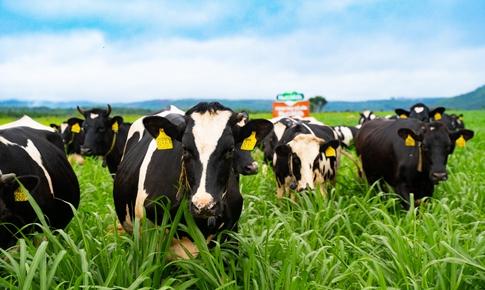 Dư địa và xu hướng phát triển nào cho ngành sữa tươi Việt Nam?